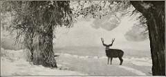 deer hunting photo
